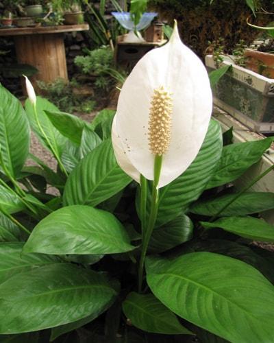 Plantas Y Feng Shui Atrae Energía Y Purifica Tu Casa